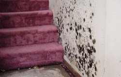 Mold remediation in Maine.